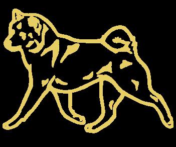 Хаски собака