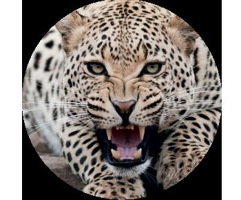 На запасное колесо леопард 2
