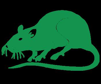 Крыса 2