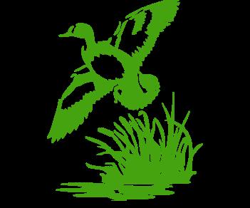 Утка на болоте