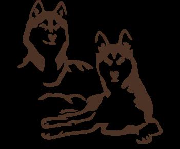 Хаски собаки
