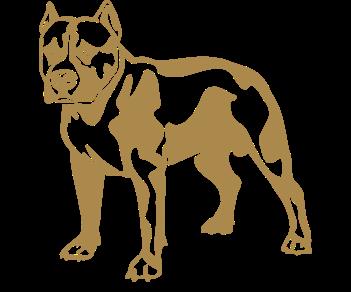 Собака питбуль