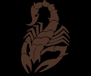Скорпион паук