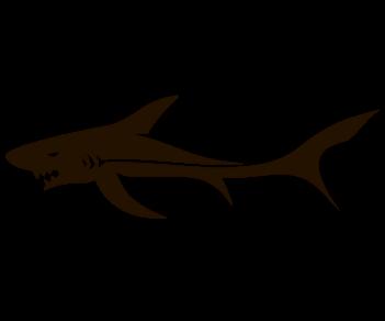 Акула 6